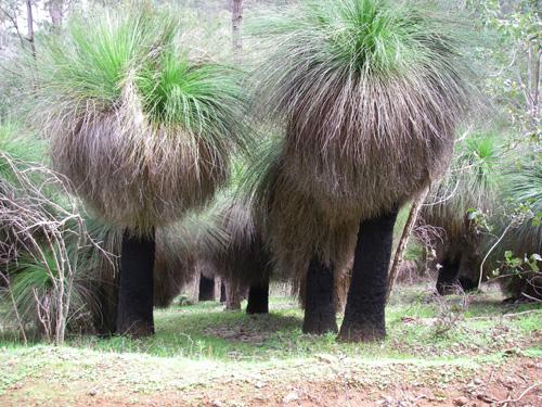 трав'яні дерева