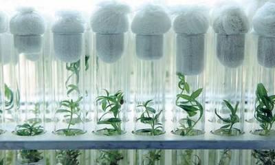 растения в пробирке