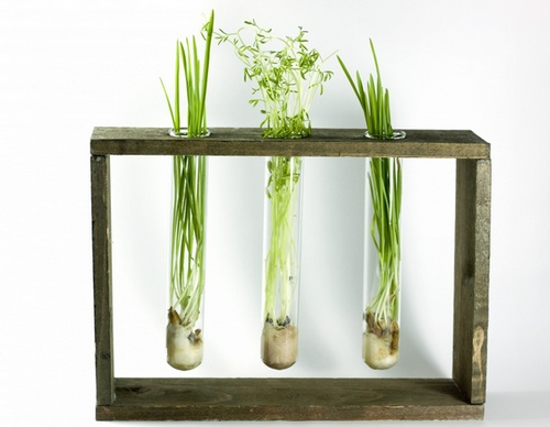 рослини у пробірці