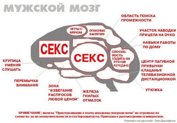 Чоловічий мозок
