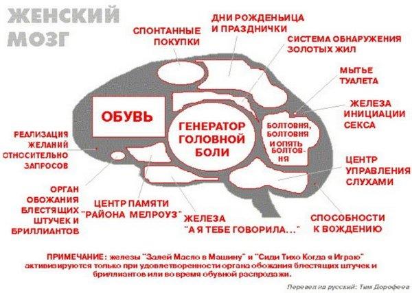Жіночий мозок