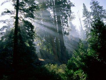 Світло і рослини