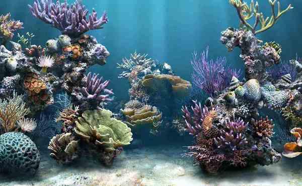 Корали