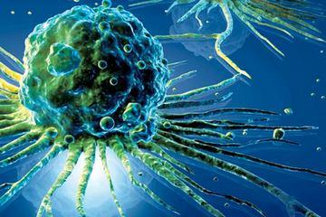 клітина