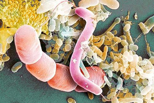 Мікроби