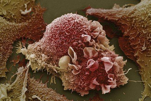 клетка под микроскопом