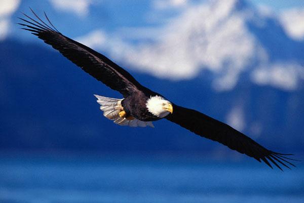 полет птицы