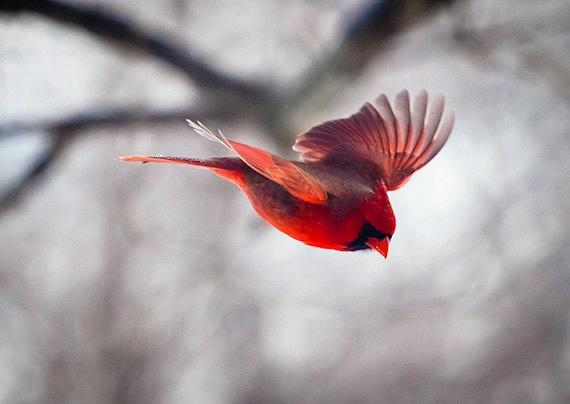 політ птаха