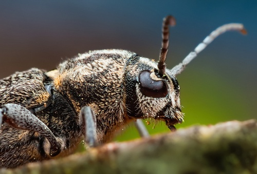 вусики комахи