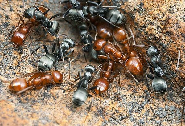 мурахи