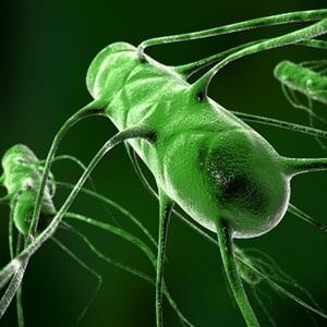 бактерія