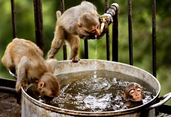 мавпи width=