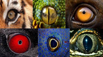 очі тварин