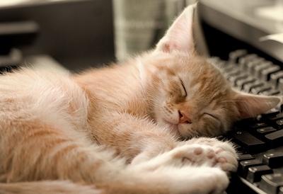 сон кота