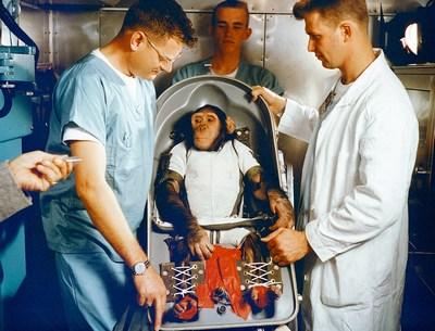 мавпа космонавт