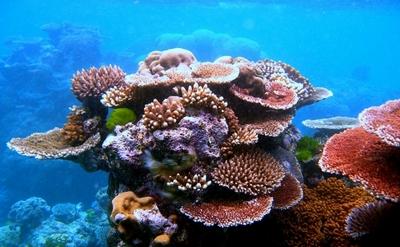підводні рифи