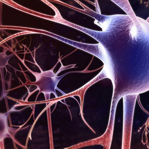 Нервные сети