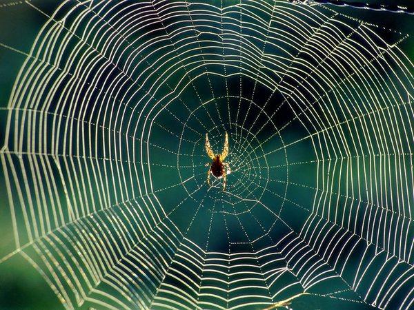 павутина та павук