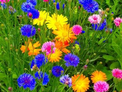 квіти на галявині