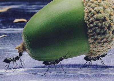 муравей несет вес