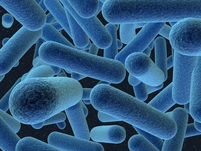 анаэробные бактерии