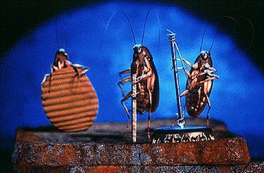 тараканы музыканты
