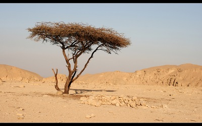 дерево в пустыне