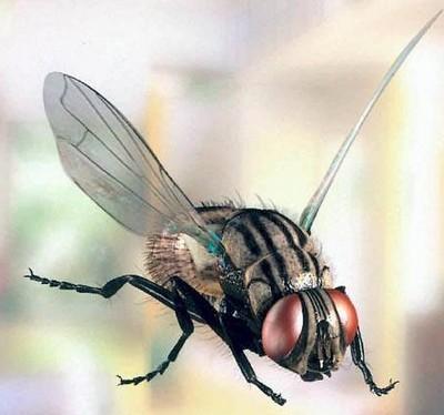 муха в польоті