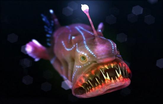 Рыба удильщик
