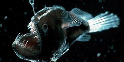 Риба-вудильник