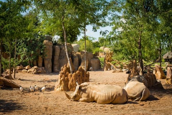 Зоопарк у Валенсії