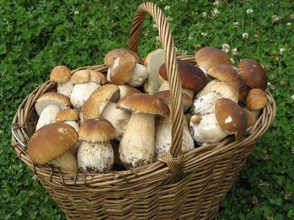 белые грибы в корзине