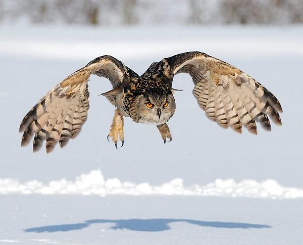 пугач летить