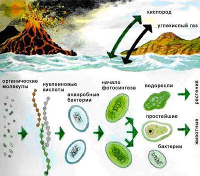 Эволюционная биохимия