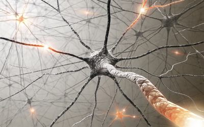 мозок клітини