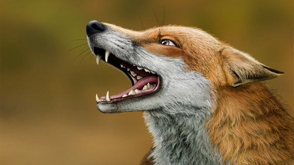 пасть лисы