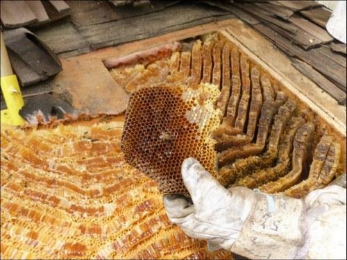 бджолиний вулик
