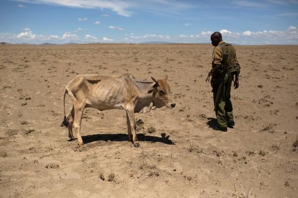 Засуха в Африці