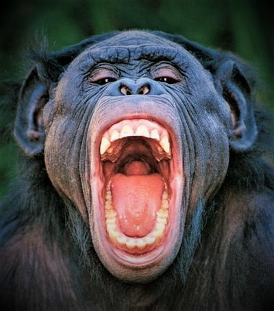 Зубы обезьян