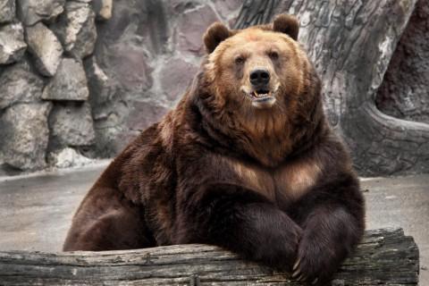ведмідь у зоопарку