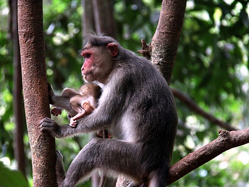 обезьяна с детьми