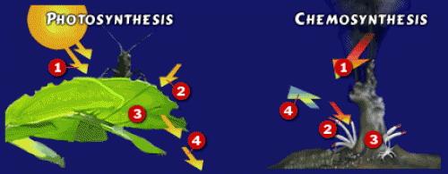 Фотосинтез и хемосинтез