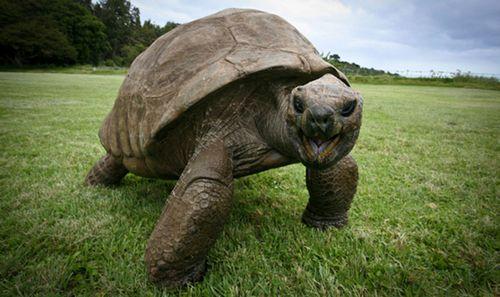 Сама стара черепаха у світі