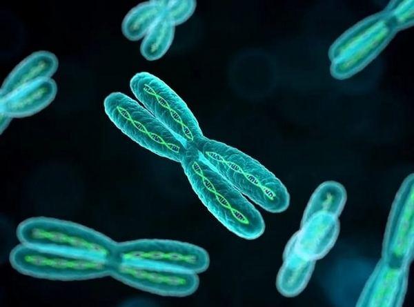 Хромосоми