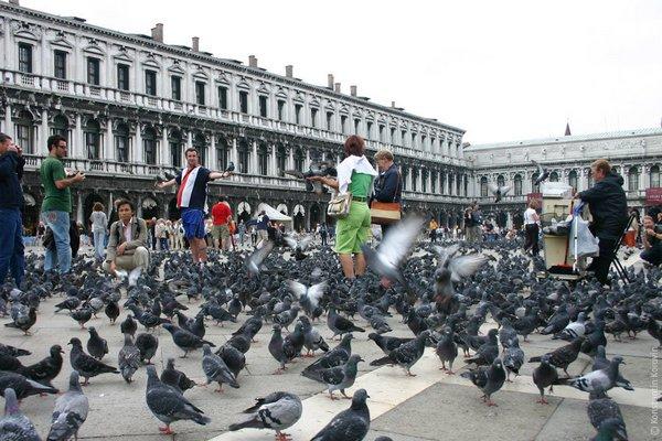голуби на площади Сан-Марко в Венеции