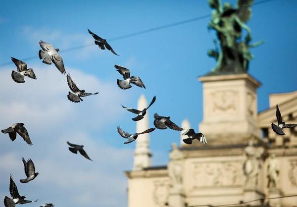 голуби над оперным театром
