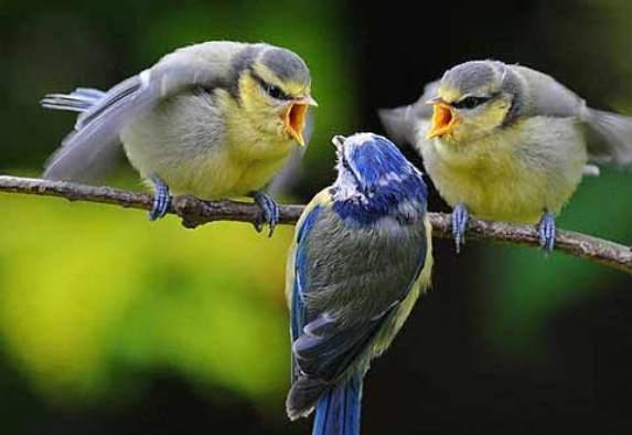 птицы говорят