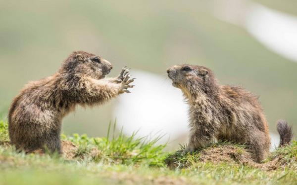 розмови тварин