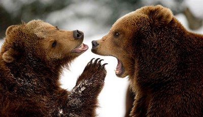 разговоры животных