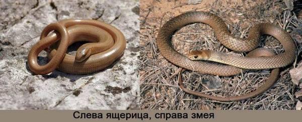 Змея и ящерица